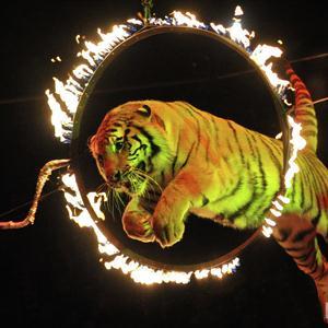 Цирки Средней Ахтубы
