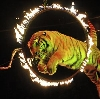 Цирки в Средней Ахтубе